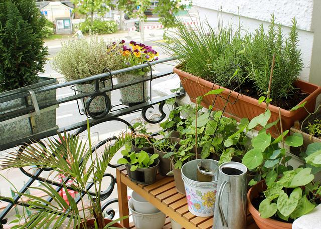15 lindas sacadas de apartamentos cheias de plantas