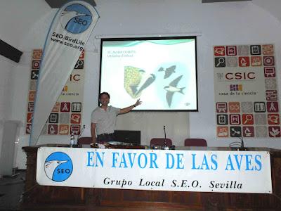 """Conferencia """"El entorno urbano, hostil para las aves. El caso del avión común en Isla Cristina"""". Por Antonio Aguilera Nieves, en el ciclo Martes Ornitológicos que el Grupo Local SEO-Sevilla organiza en el museo Casa de la Ciencia de Sevilla."""