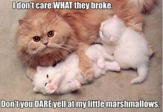 lolcat mom