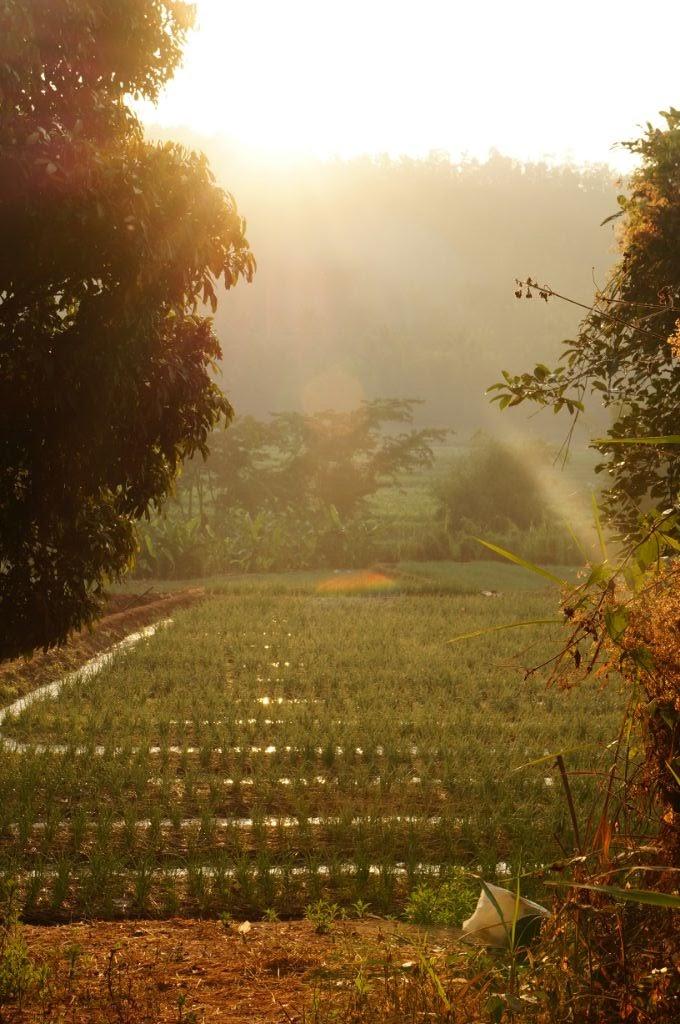 Les rizières de Mae Chaem
