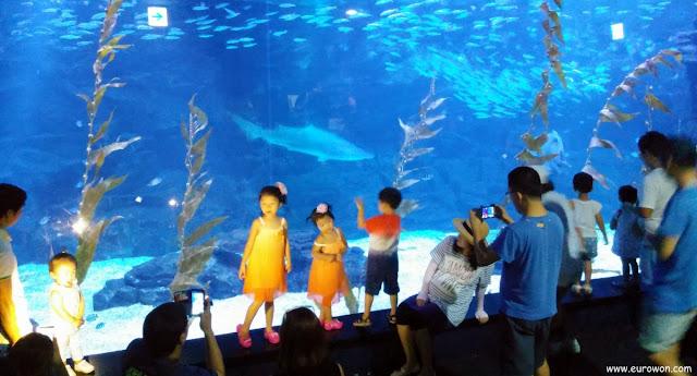 Niños y adultos difrutando de un gran acuario