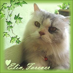 RIP ELIN