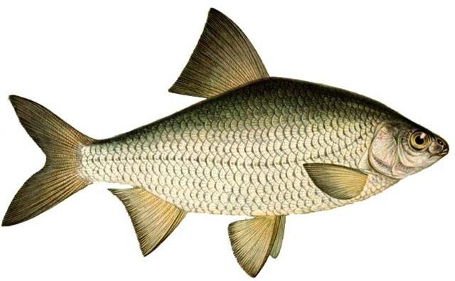 спрей-активатор fish xxl отзывы