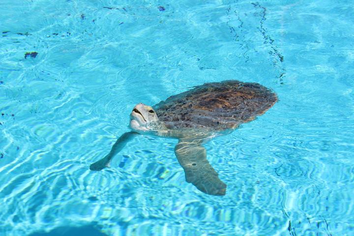 Tourism Clearwater Marine Aquarium