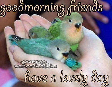 480 x 374 jpeg 83kB, Good Morning Friends n Have a Lovely Day