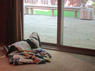 basset hound looking out door