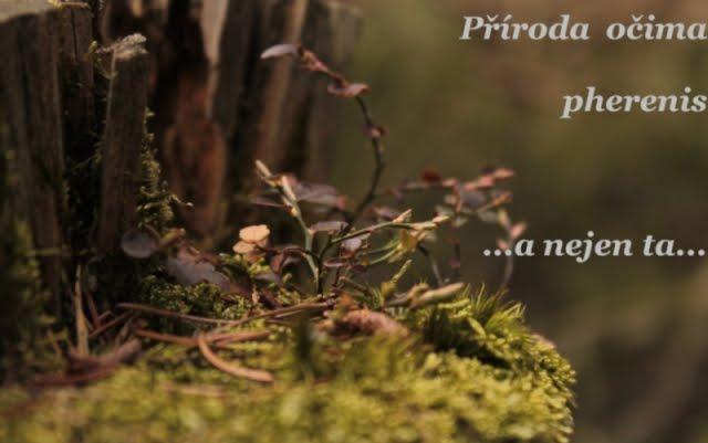 Příroda očima pherenis