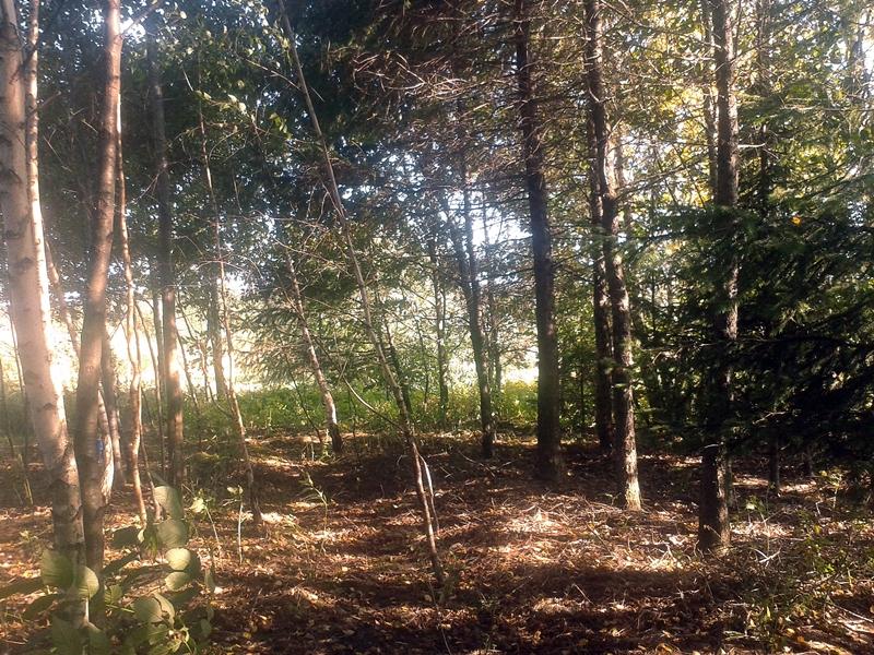mały las