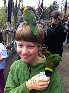 BirdMan Lorrie