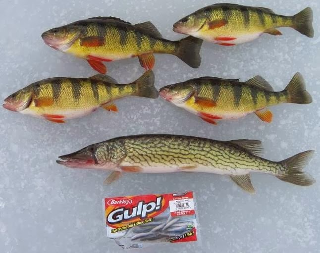 Fat boy 39 s outdoors why do you love to ice fish i e why for Ice fishing perch lures