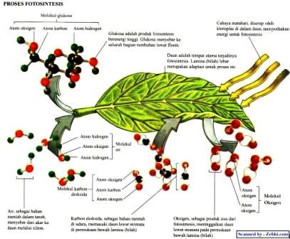 BIOLOGI 1A TEKNIK LABORATORIUM