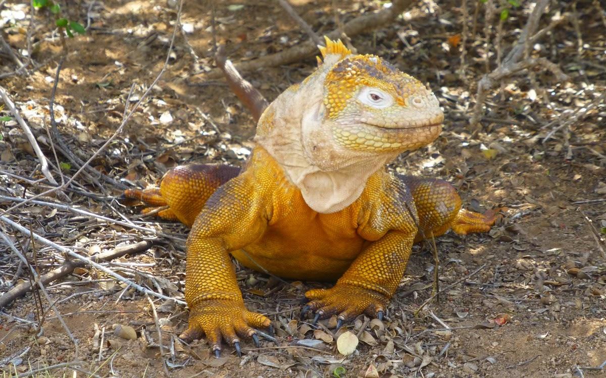natuur galapagos per seizoen