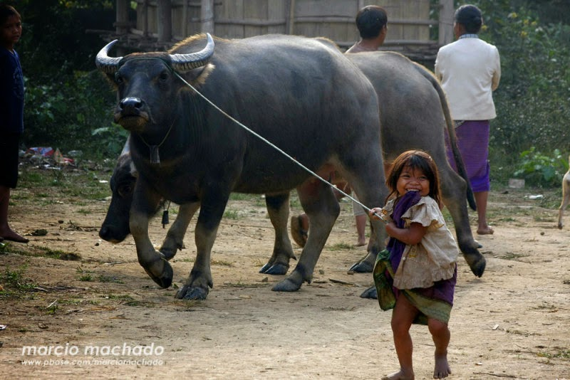 Cute Little Girl With Her Pet Buffalo