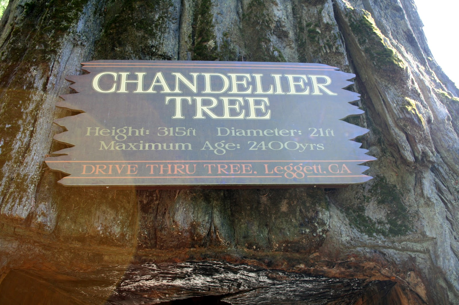 Joe diane mallerys big adventure modern day gypsies the tree is the chandelier tree which is privately owned in leggett ca it is a redwood tree and stands at 315 feet tall and is at least 2400 years old arubaitofo Images