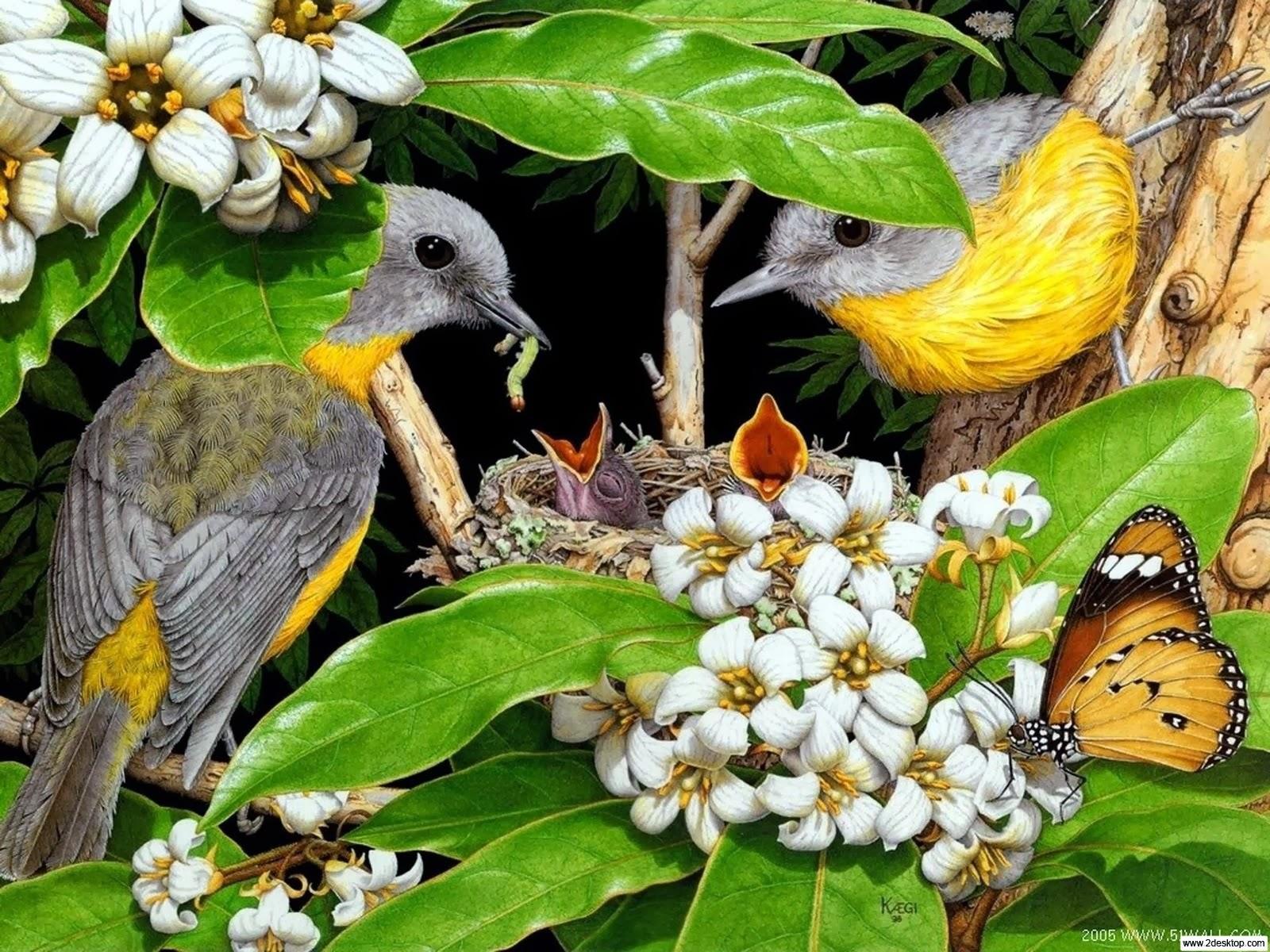 """<img src=""""http://4.bp.blogspot.com/-iLvIxES0ySw/UtujCmcU0KI/AAAAAAAAI7s/1axYG5eJjcg/s1600/bird-family.jpg"""" alt=""""bird family"""" />"""