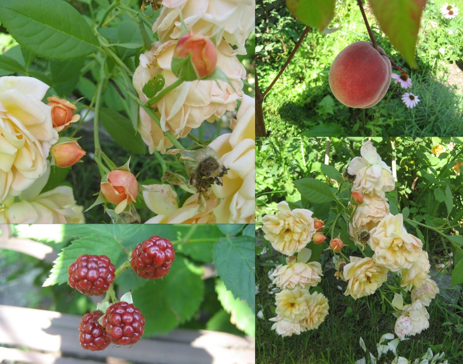 Weißer Garten lille lykke weißer garten