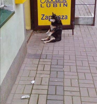 Сидящая собака