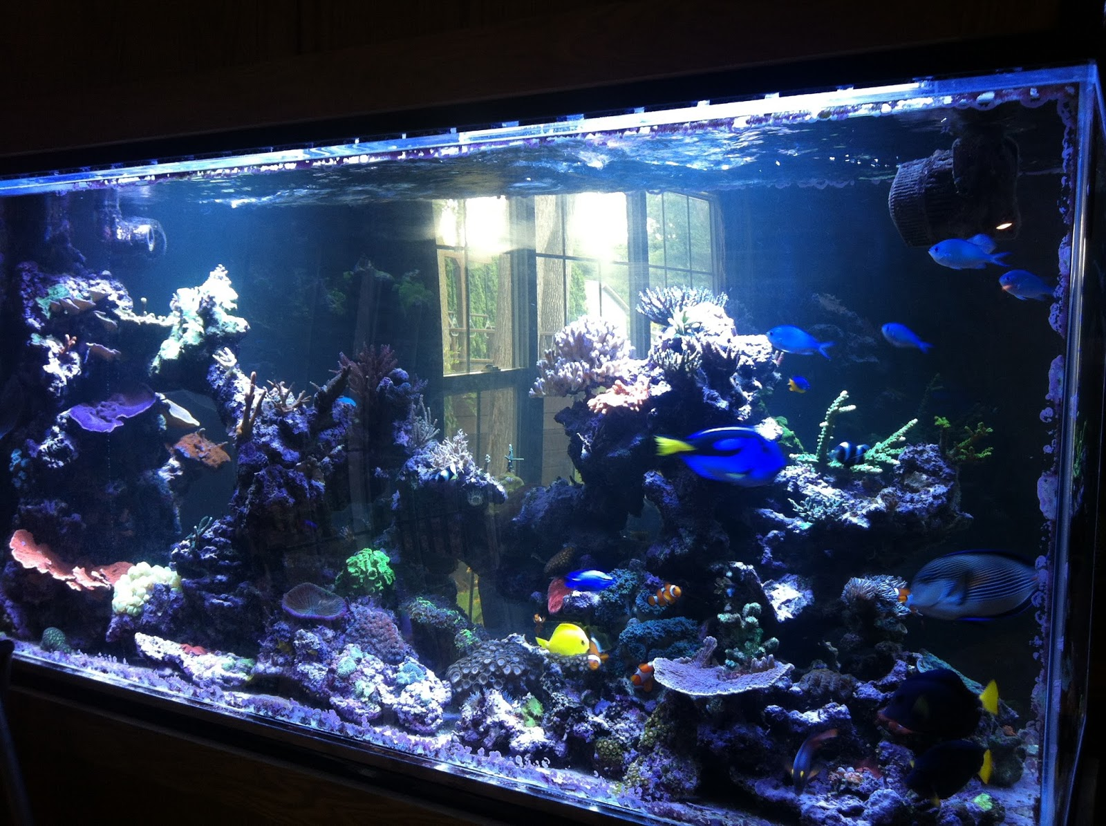Life of tracy saltwater fish tank for Marine fish tanks