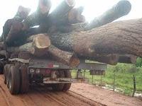 Paraguay antiguo exportador de Madera Nativa hoy importa leña para uso energético industrial