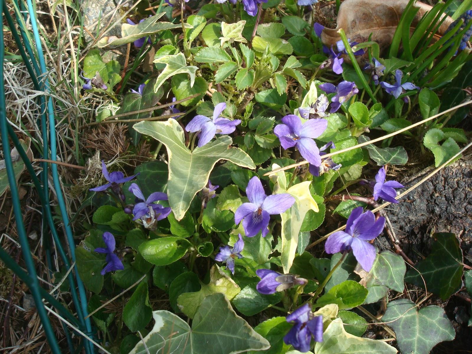 Fleuriste isabelle feuvrier dans le jardin de papi fleur for Fleurs dans le jardin