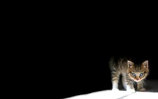 Shy cat wallpaper