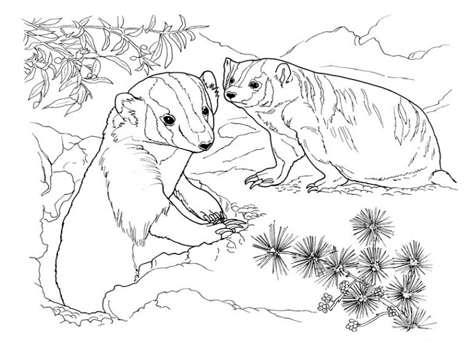 Badger Coloring Pages Realistic Realistic Coloring Pages Realistic Colouring Pages