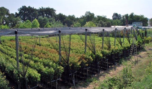 Vivaio Margine Rosso : Vendita piante vivai spallacci frutti antichi & dimenticati