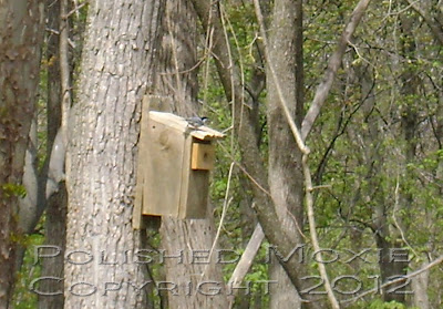 Image of a nuthatch on top of a birdhouse.