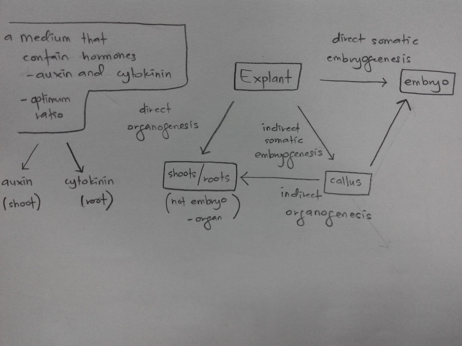 Cell Theory Concept Map.Cell And Development Biology Week 6 Topic 6 Plant Cell
