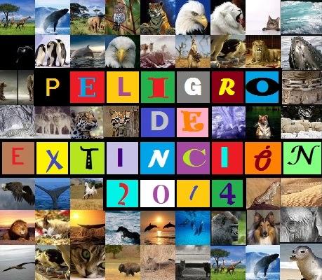 imagenes de los animales en peligro de extincion - Los 10 animales en grave riesgo de desaparecer en