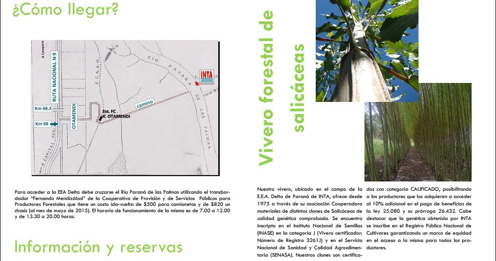 Delta forestal vivero forestal de salic ceas de la eea for Proyecto productivo de vivero forestal