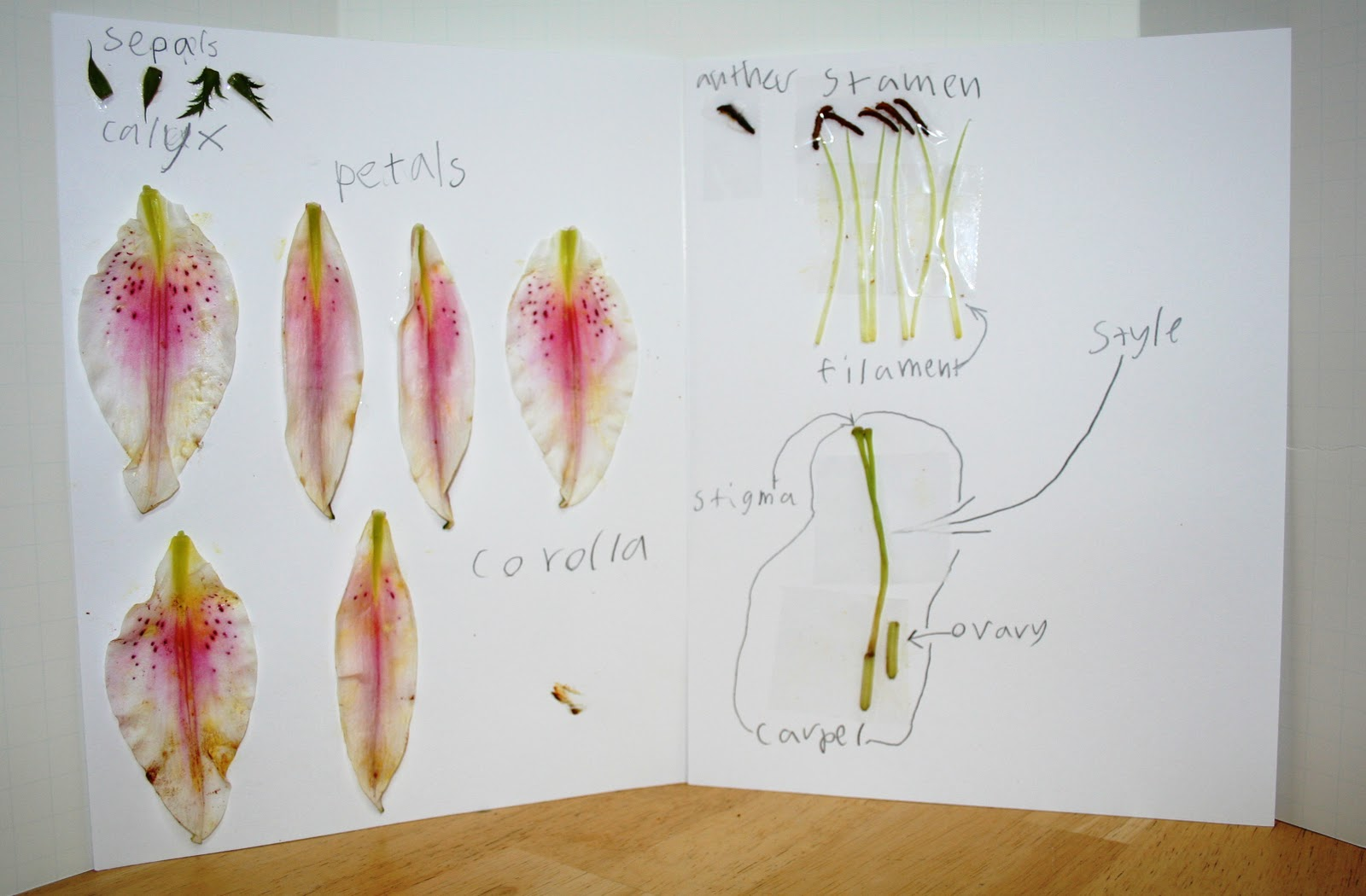 Our Nest of 3 Flower Dissection – Flower Dissection Worksheet