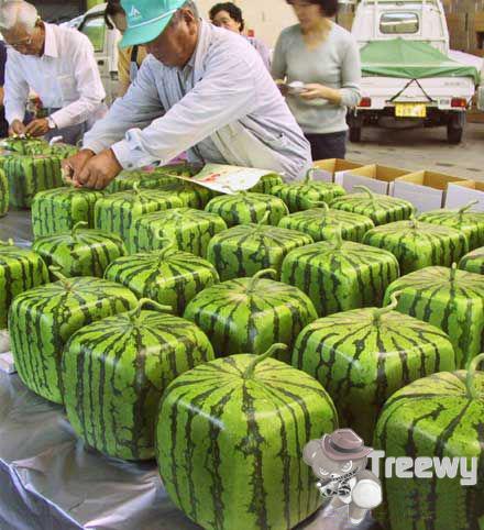 Preço da melancia