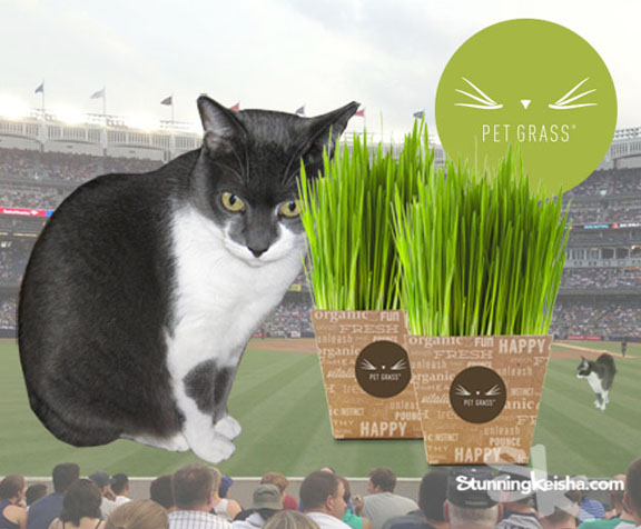 #PetGrass … a Whole New Ballgame For Your Cat #ad
