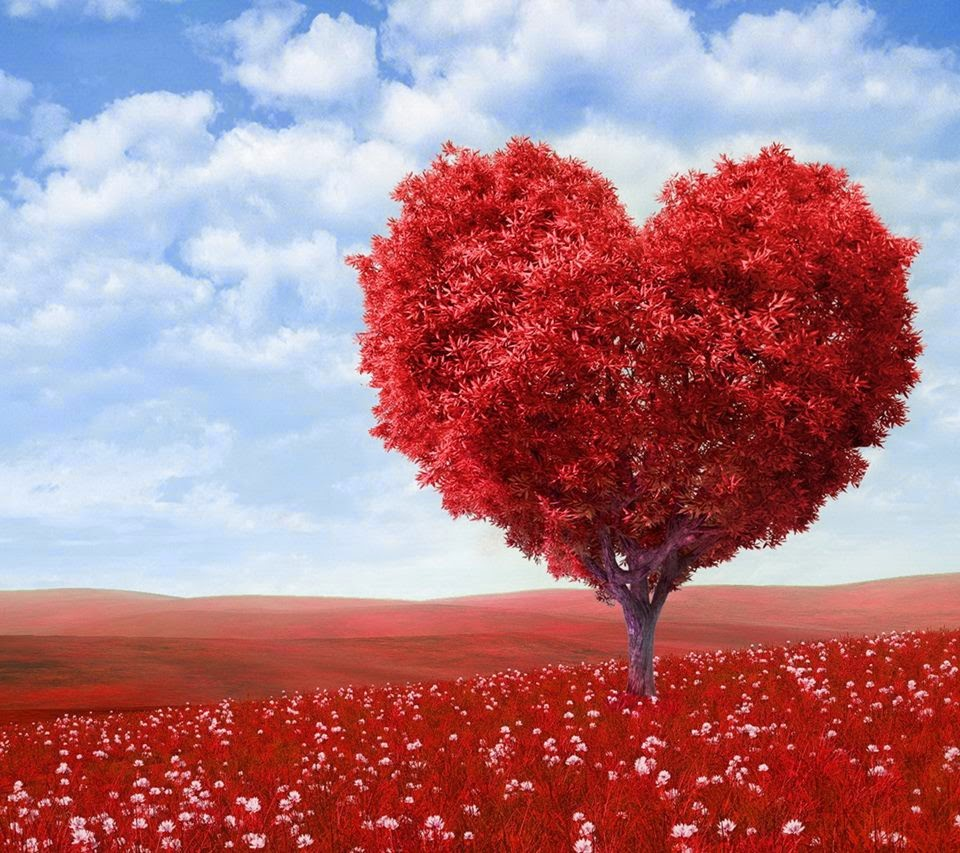 lovable images nature hearts wallpapers free download