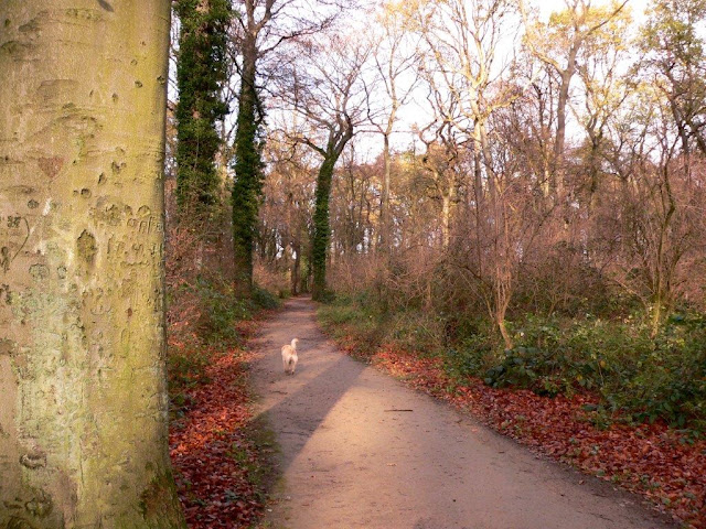 Naturlehrpfad Alte Körne Dortmund Kurl Scharnhorst Natur Hunderunde spaziergang wandern Herbst Winter Dorf
