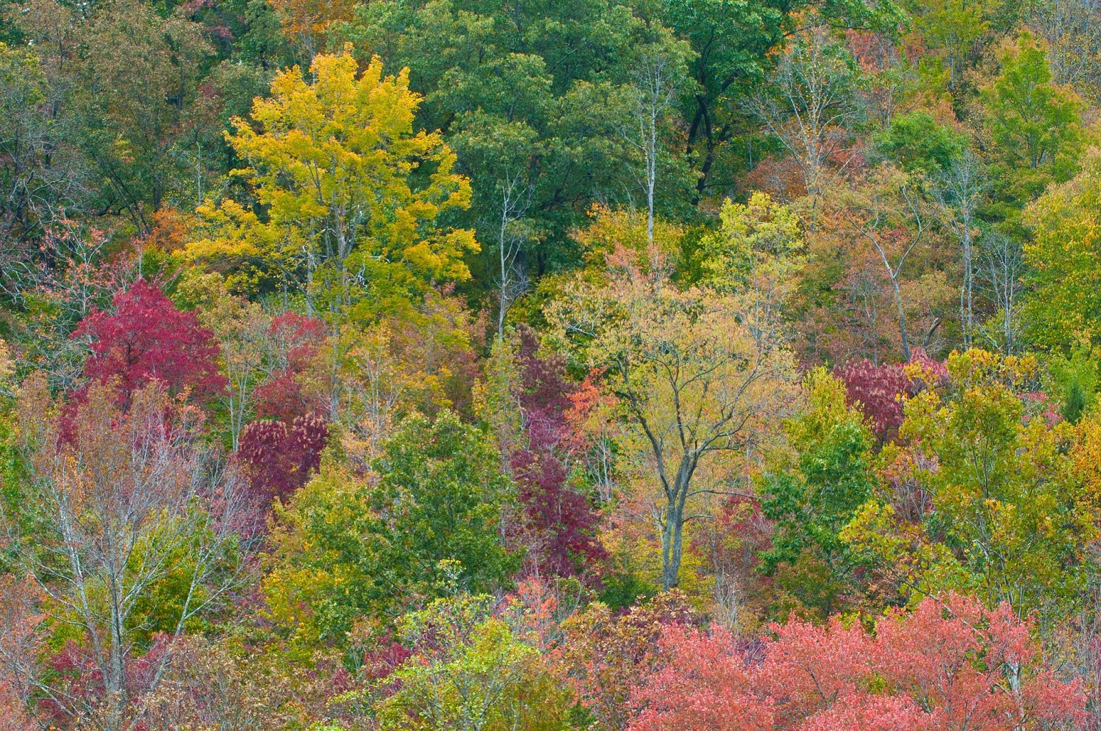 Kentucky Native Plant and Wildlife: What will fall color 2013 be ...