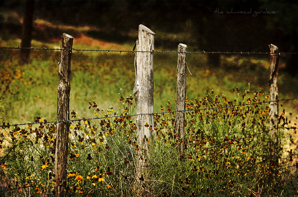 old cedar fence posts
