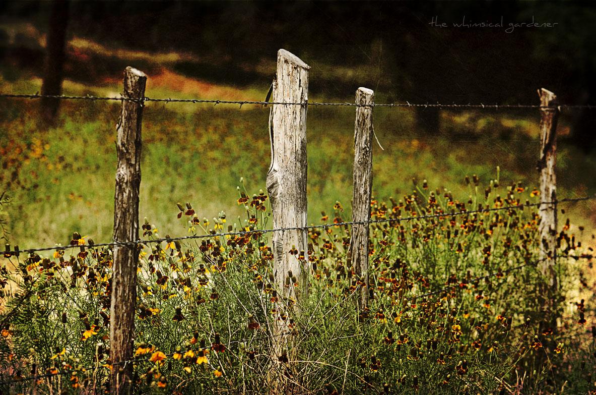 old cedar fence posts