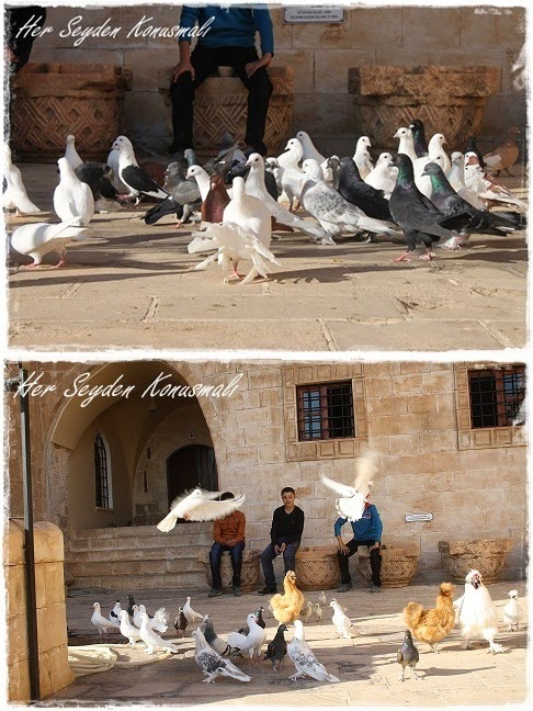 Mardin güvercinler