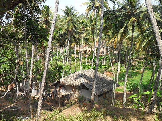дом посреди кокосовых пальм