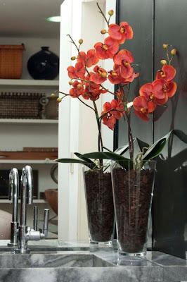 6 Flores para a sua casa...!