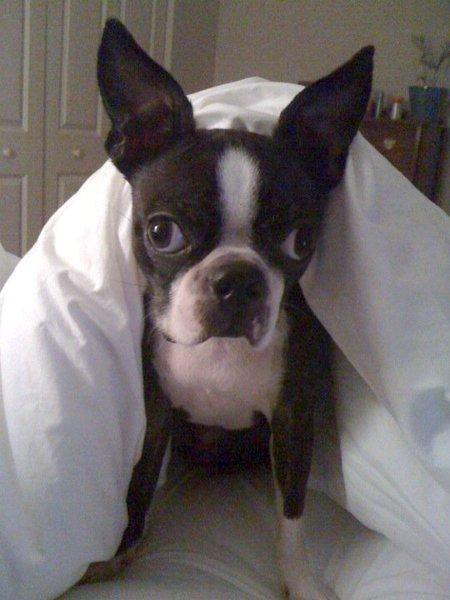 Dog - image source http://lilliemcferrin.com/five-sentence-fiction-devotion-2/
