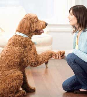 Many Dog Tricks You Should Know Shake hands