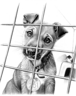 Beautiful and Amazing Pencil Drawings pictures