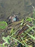 Bye Frogs!