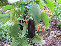 Vegetables and Perennials