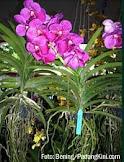 Bunga TermahaL : )