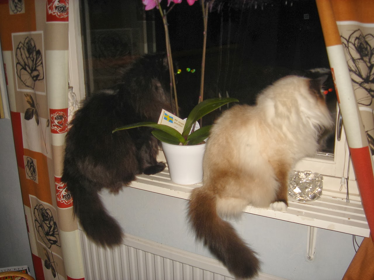 Cute picture of Morris & Chasmine looking out in the darkness