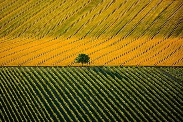 Agricultural Landscape Near Cognac, Charente, France